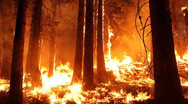 wildfires-1.jpg